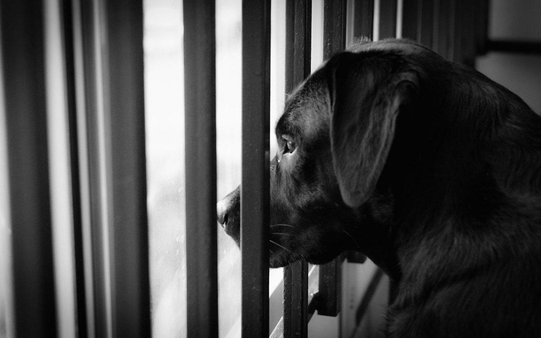 Cane sul balcone: il confinamento è il risultato di una scelta sbagliata