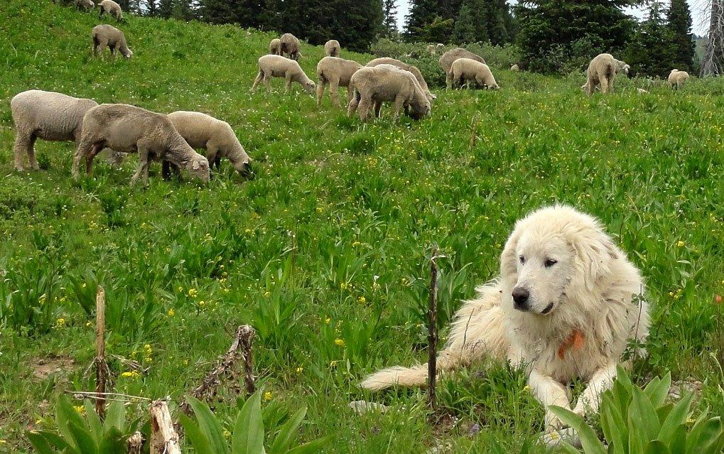 Parco del Gargano combatte randagismo e ibridazione fra cani e lupi