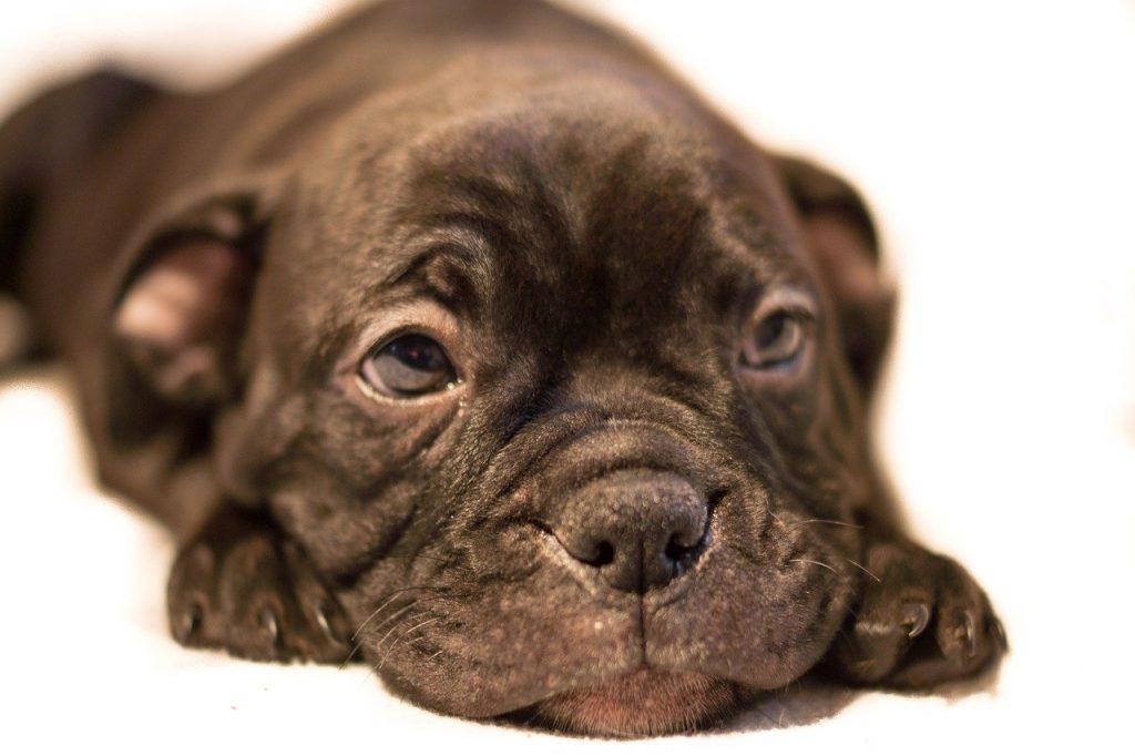 contrasto alla tratta dei cuccioli