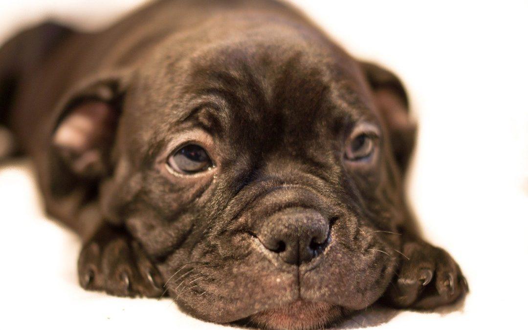 Il contrasto alla tratta dei cuccioli (forse) sarà attuato dall'Europa in modo concreto