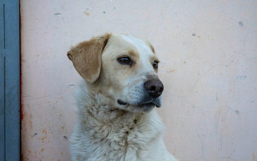 Cani abbandonati causa Covid-19: una fake news diffusa da troppi giornali