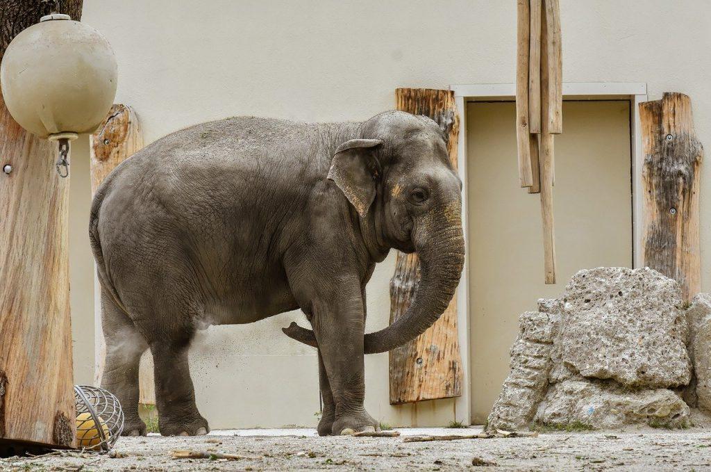 Zoo e circhi minacciano di uccidere gli animali