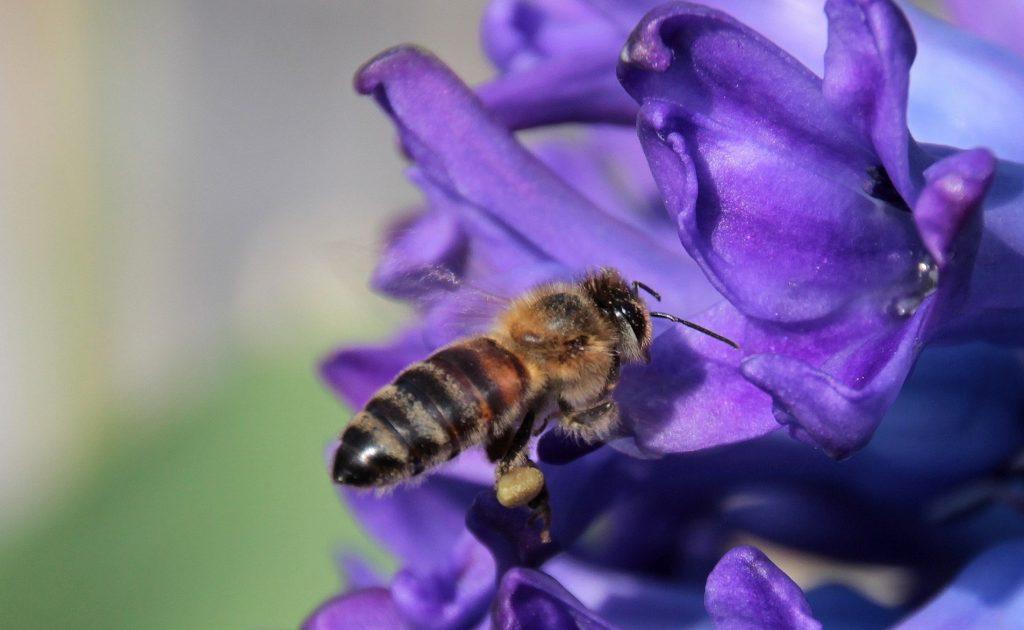 Difendiamo gli insetti impollinatori