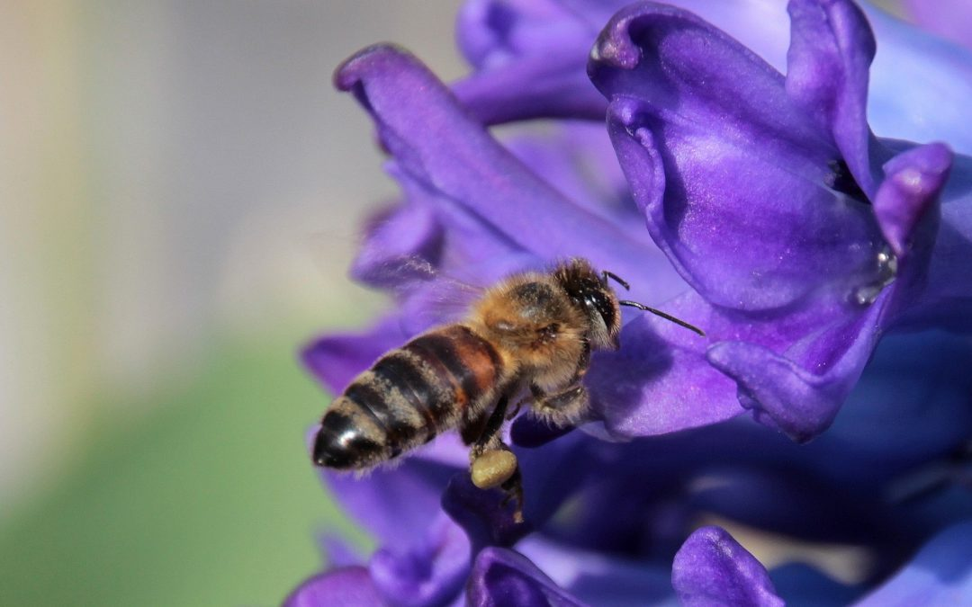 Difendiamo gli insetti impollinatori partecipando a un'azione che coinvolge tutti i cittadini europei