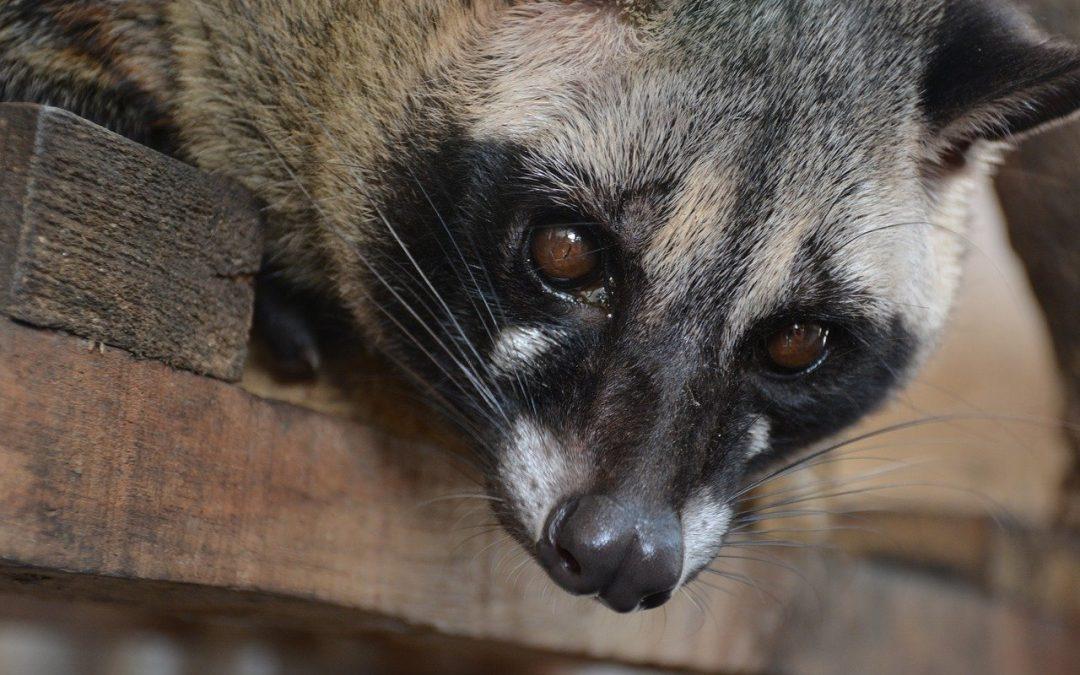 La strage di animali causata dalla pandemia è una tragedia silenziosa, senza riflettori