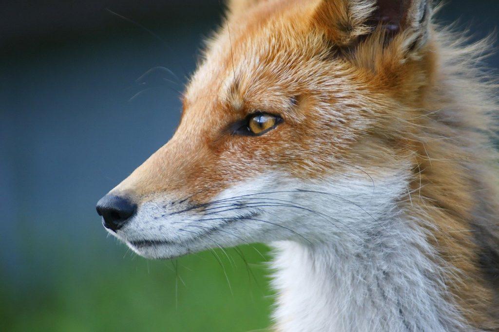 tutelare animali e ambiente