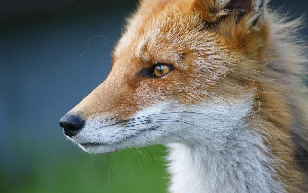 Unica strategia rimasta per tutelare animali e ambiente è quella di cacciare via certi politici