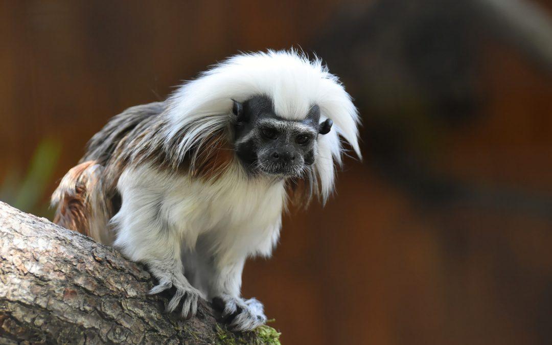 Virus SARS-Cov-2 aiuta chi disbosca la foresta amazzonica, grazie all'assenza di controlli