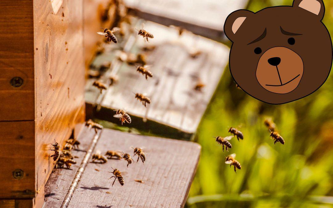 L'orso cerca il miele, ma cosi poi l'uomo cerca l'orso per metterlo dentro un recinto