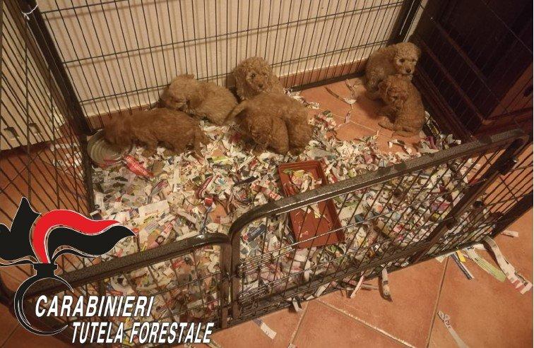 truffa dei cuccioli sul web