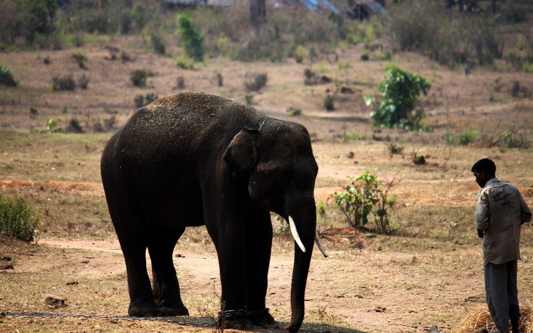 La crudele morte dell'elefantessa deve fare riflettere sull'importanza dell'empatia