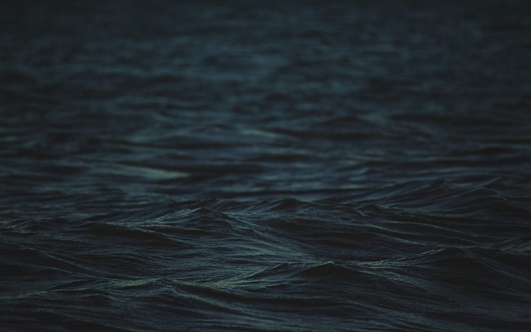 Le acque scure e agitate di Yulin parlano di indifferenza nei confronti della sofferenza animale e umana