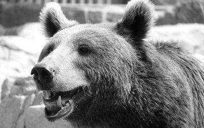 Abbattimento orso in Trentino: il ministro Costa pronto a impugnare l'ordinanza della provincia