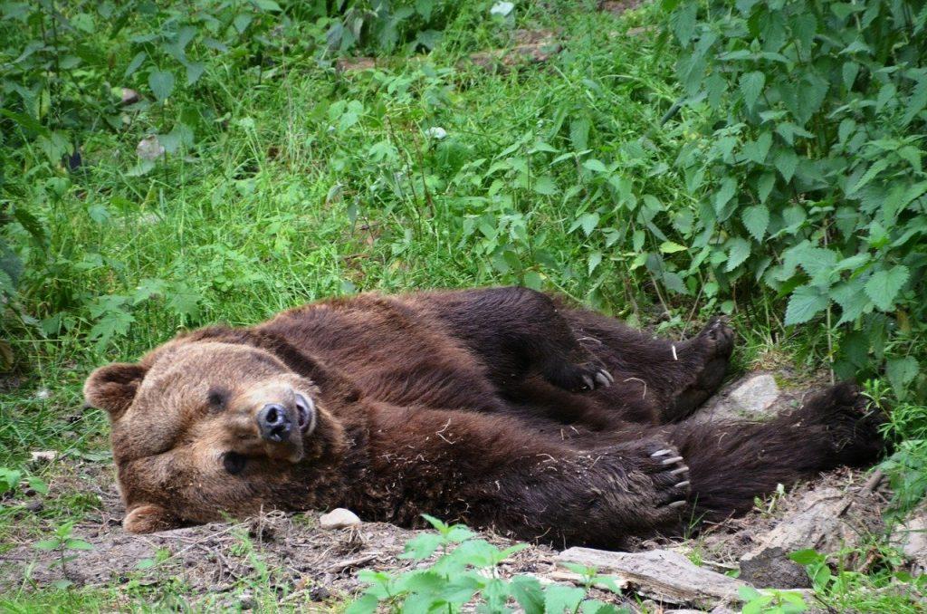 Orso ucciso in Abruzzo