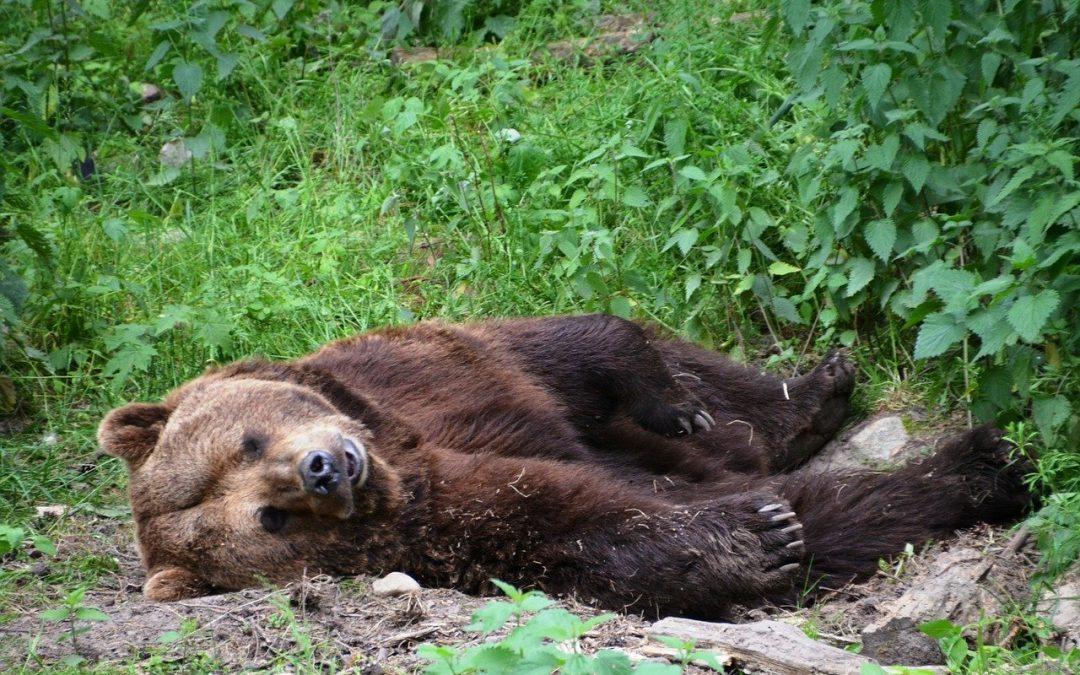 Orso ucciso in Abruzzo: la Corte d'Appello condanna il responsabile a risarcire l'Ente Parco