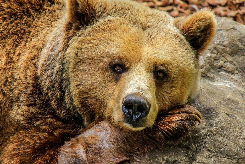 Jj4 orsa sotto tiro