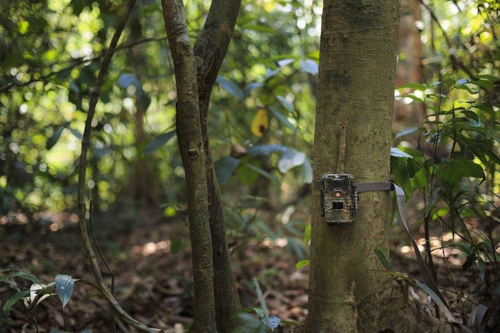 Fototrappole rubate ai naturalisti