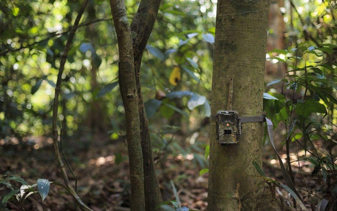 Fototrappole rubate ai naturalisti, ma i furti iniziano sempre a fine agosto