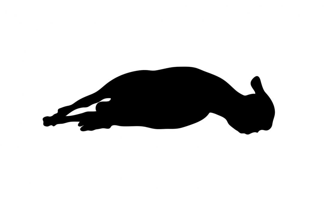 Festa del sacrificio fra politica e ipocrisia: bisogna abolire la macellazione degli animali senza stordimento!