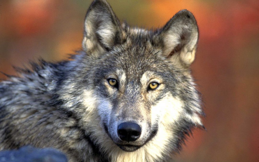 Sono le elezioni il pericolo per la fauna, per la continua ricerca dei voti fatta dai politici