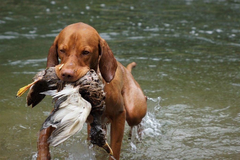 Riapre la caccia