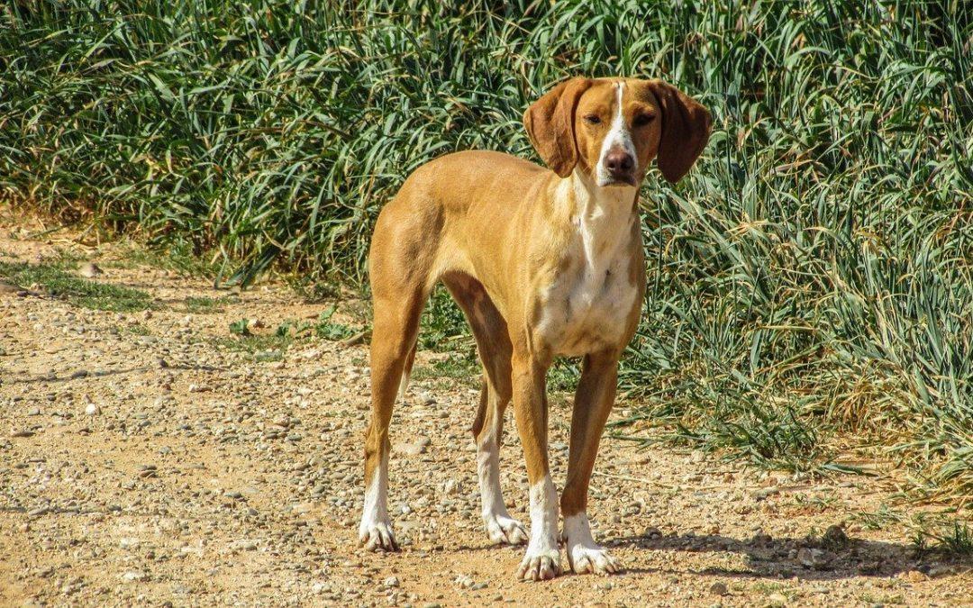 Un cane randagio vale 200 Euro, per chiunque lo adotti nel Comune di Cusano Mutri