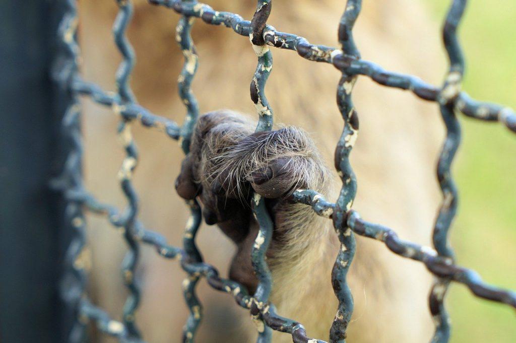 rispettare i diritti degli animali