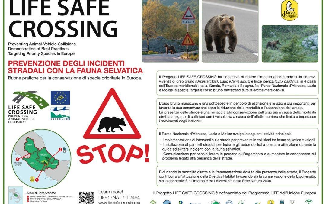 L'informazione su orsi e lupi è fondamentale: prendiamo esempio dal Parco d'Abruzzo