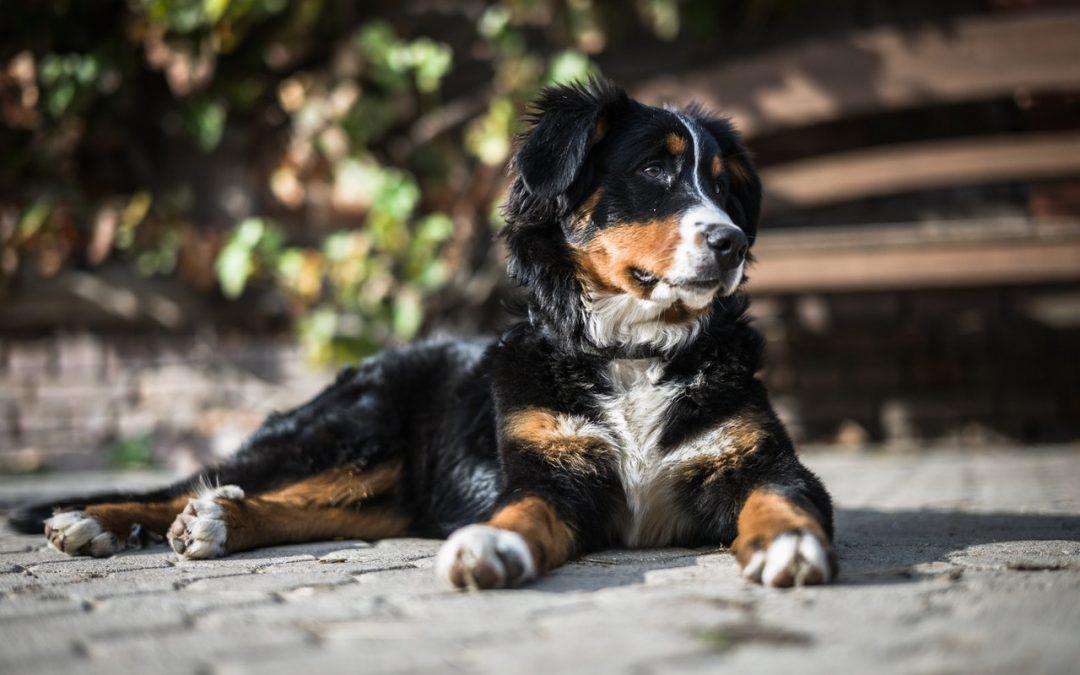 Picchia il cane con violenza, ma il giudice decide per la messa alla prova e glielo restituisce. Un grave errore.