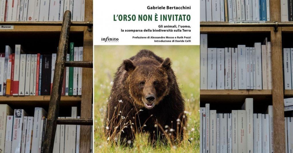 orso non è invitato