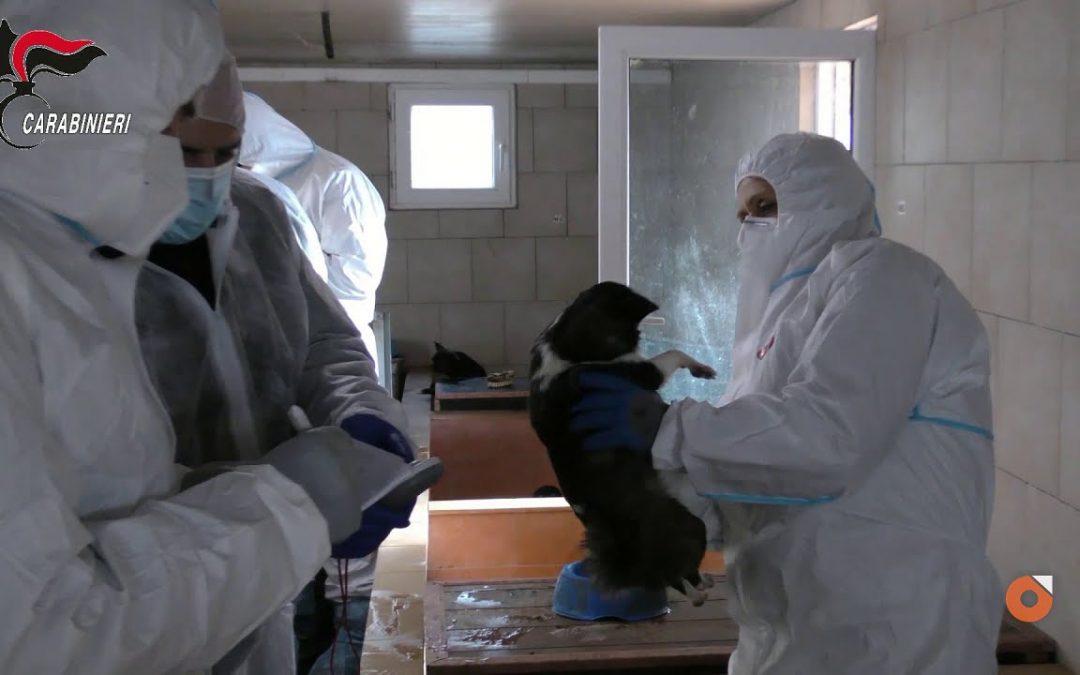 Sequestrato per maltrattamenti allevamento di cani nelle Marche: ancora una volta i controlli risultano carenti