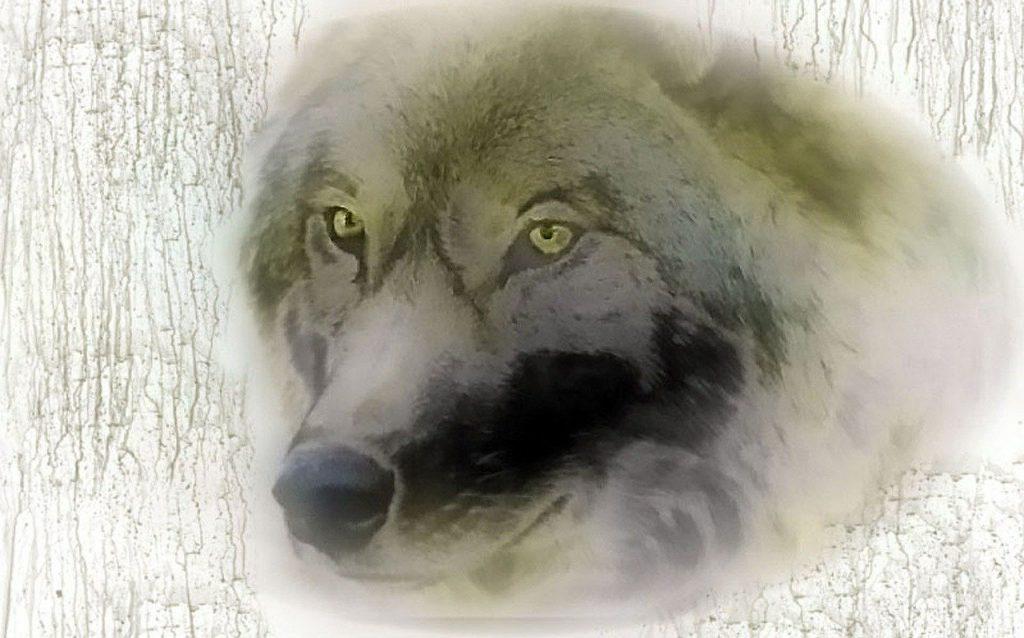 Abbattimento lupi Trentino Alto Adige
